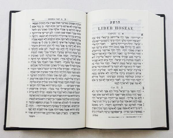 Hebrew Old Testament-5629
